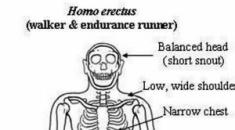 Ο «όρθιος άνθρωπος» Homo erectus ήταν ναυτικός γι' αυτό έφθασε και στην Κρήτη
